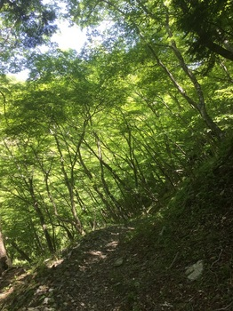 丹沢登山道8.JPG